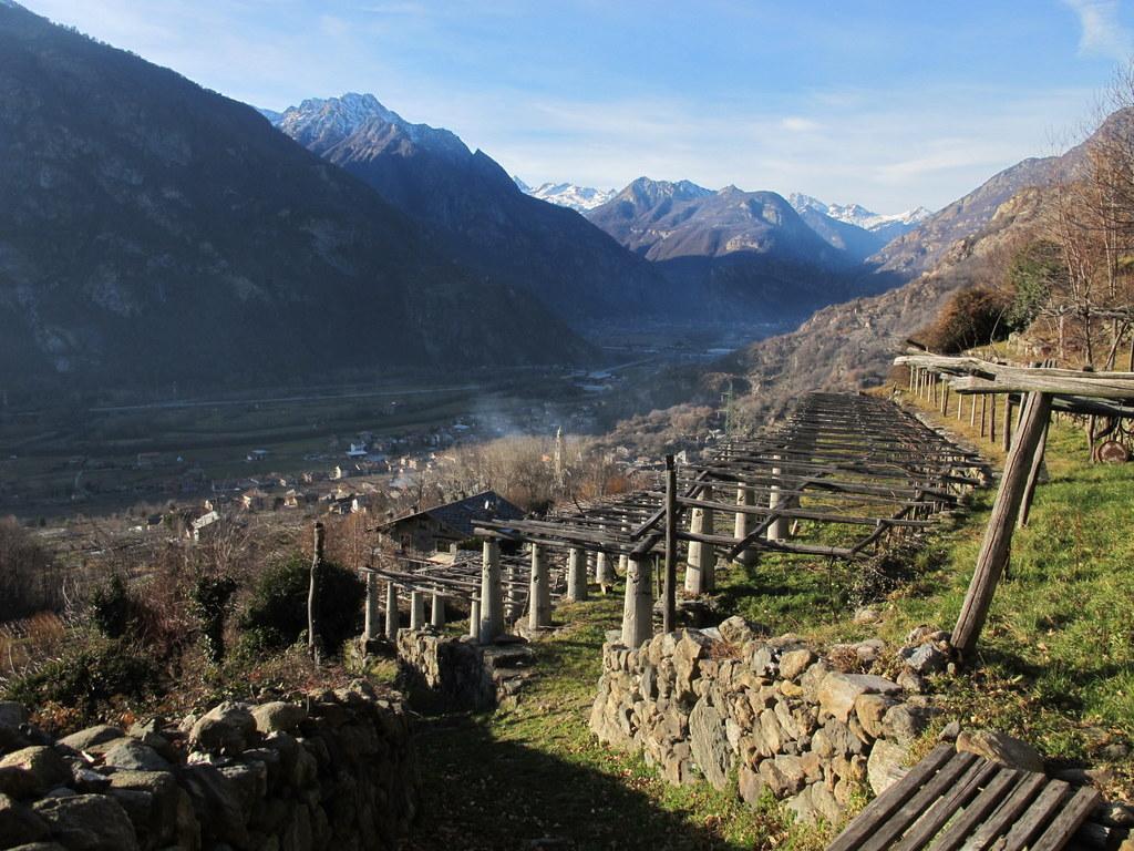 local wineyard